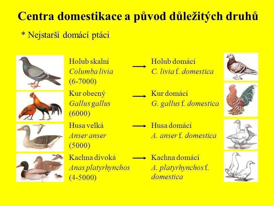 Centra domestikace a původ důležitých druhů * Nejstarší domácí ptáci Holub domácí C. livia f. domestica Kur domácí G. gallus f. domestica Husa domácí
