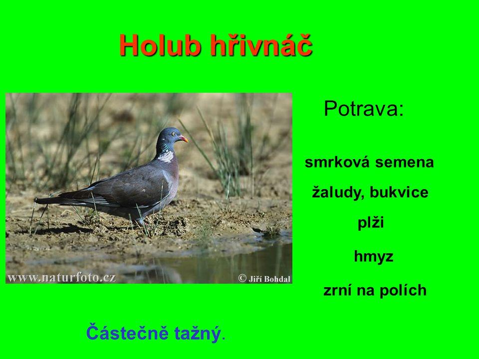 Užitečnost kukačky Živí se velkými, chlupatými housenkami, na které si ostatní ptáci netroufnou.