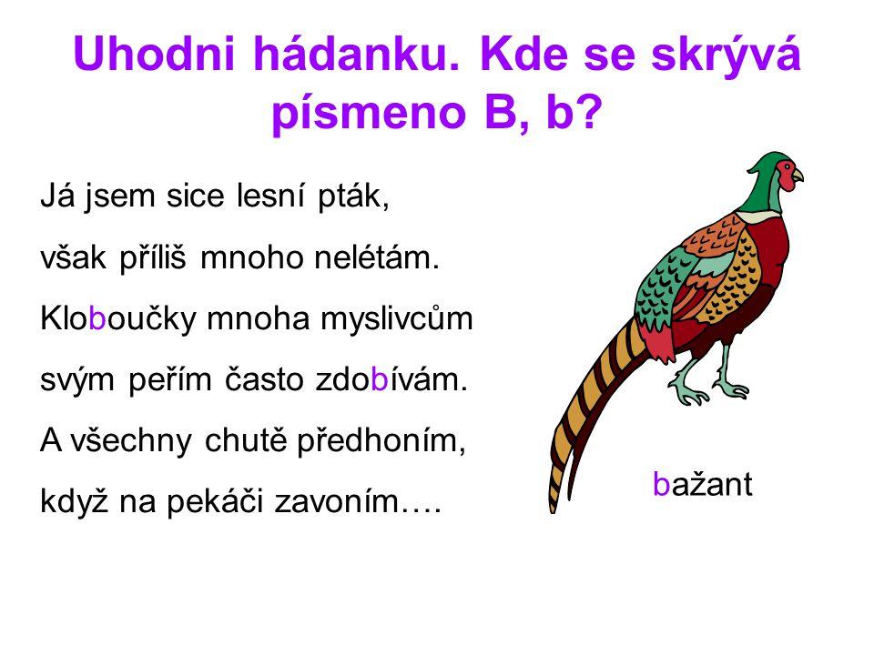Uhodni hádanku. Kde se skrývá písmeno B, b? Já jsem sice lesní pták, však příliš mnoho nelétám. Kloboučky mnoha myslivcům svým peřím často zdobívám. A