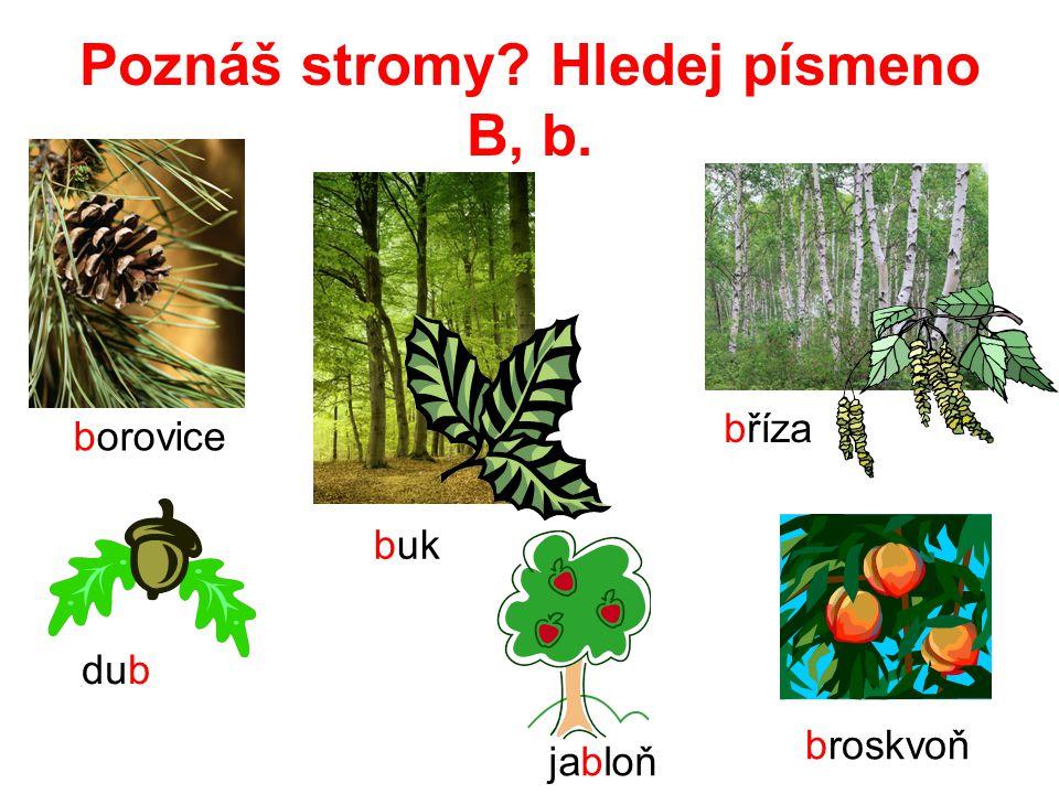 Poznáš stromy? Hledej písmeno B, b. borovice buk dub bříza jabloň broskvoň