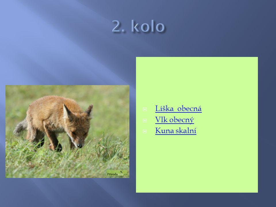  Liška obecná Liška obecná  Vlk obecný Vlk obecný  Kuna skalní Kuna skalní