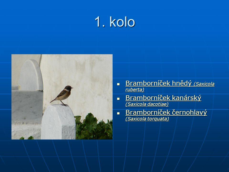 1. kolo Bramborníček hnědý (Saxicola ruberta) Bramborníček hnědý (Saxicola ruberta) Bramborníček hnědý (Saxicola ruberta) Bramborníček hnědý (Saxicola