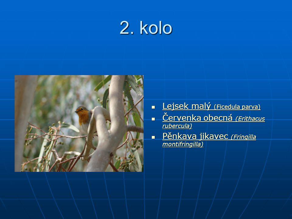 2. kolo Lejsek malý (Ficedula parva) Lejsek malý (Ficedula parva) Lejsek malý (Ficedula parva) Lejsek malý (Ficedula parva) Červenka obecná (Erithacus