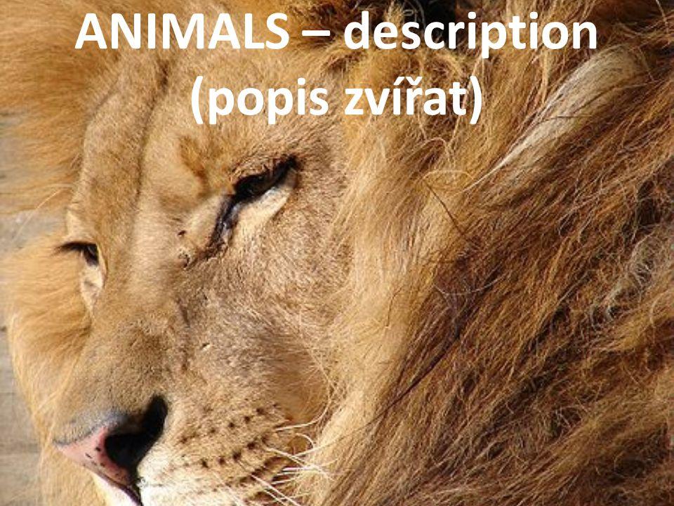 ANIMALS dog[dɒg] cat[kæt] snake[sneɪk] tortoise[ˈtɔːtəs] guinea pig [ˈgɪnɪ pɪg] fish[fɪʃ] budgie[ˈbʌdʒɪ] hamster [ˈhæmstə] rabbit [ˈræbɪt] PETS FARM goat[gəʊt] goose[guːs] horse[hɔːs] pig[pɪg] sheep[ʃiːp] cow[kaʊ]