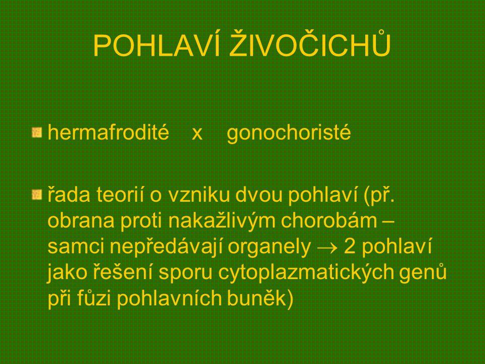 POHLAVÍ ŽIVOČICHŮ hermafrodité x gonochoristé řada teorií o vzniku dvou pohlaví (př. obrana proti nakažlivým chorobám – samci nepředávají organely  2