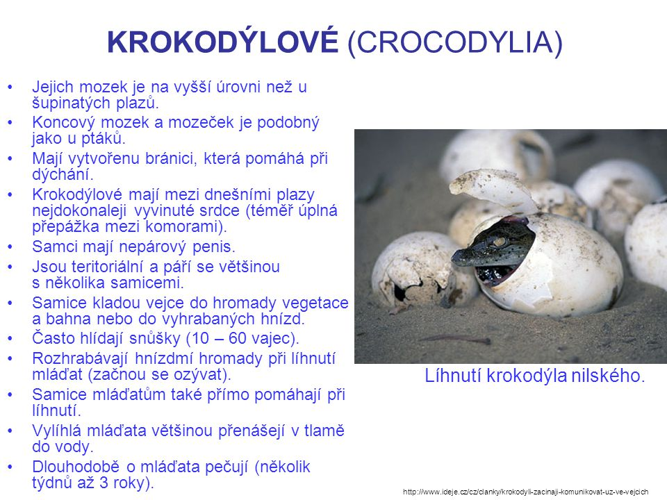 KROKODÝLOVÉ (CROCODYLIA) Krokodýlové žijí polovodním životem v tropech a subtropech.