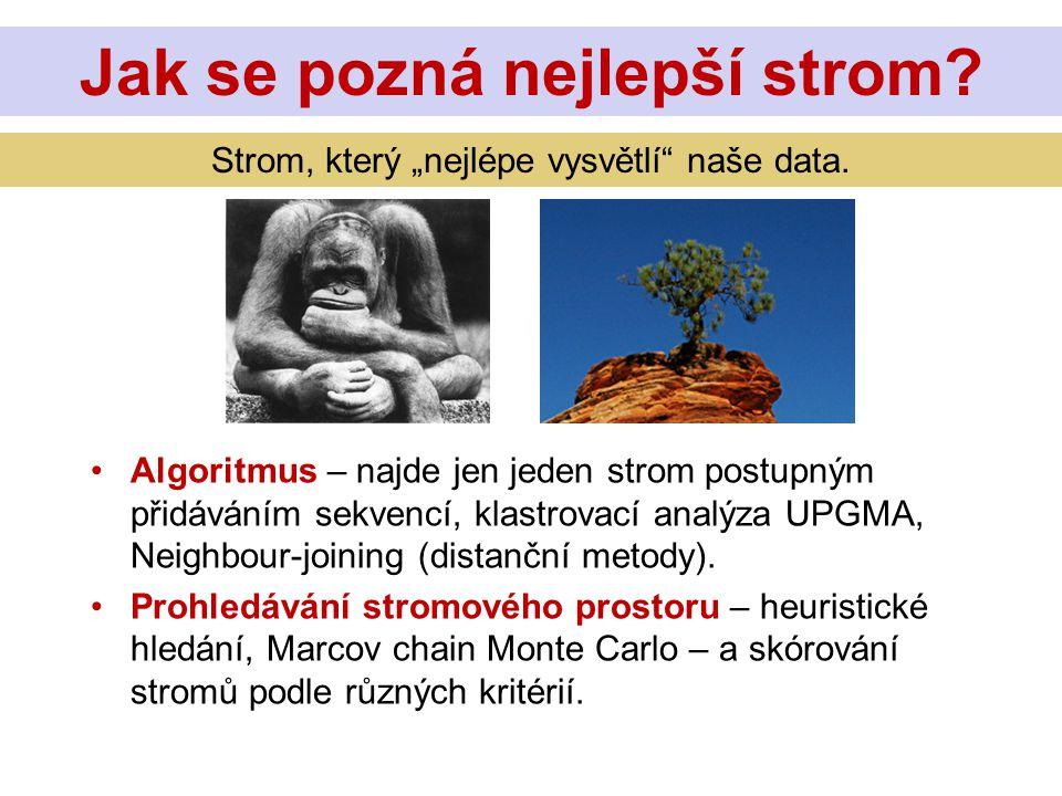 Algoritmus – najde jen jeden strom postupným přidáváním sekvencí, klastrovací analýza UPGMA, Neighbour-joining (distanční metody). Prohledávání stromo