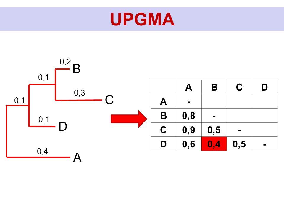 UPGMA C B D A 0,2 0,3 0,1 0,4 0,1 ABCD A- B0,8- C0,90,5- D0,60,40,5-