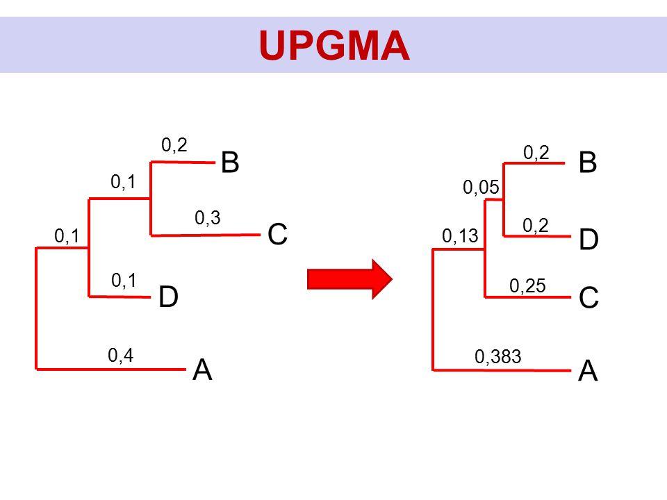 UPGMA C B D A 0,2 0,3 0,1 0,4 0,1 D B C A 0,2 0,05 0,383 0,13 0,2 0,25