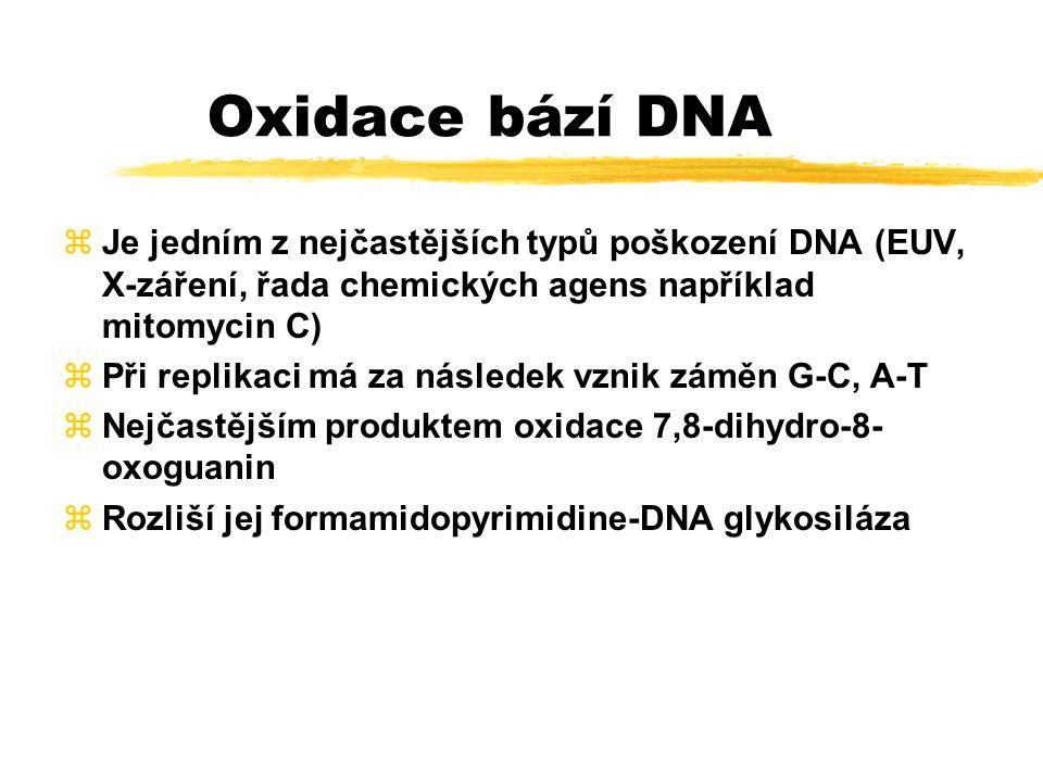 Excizní reparace nemá snad žádné specifické enzymy, využívá enzymy aktivované např.