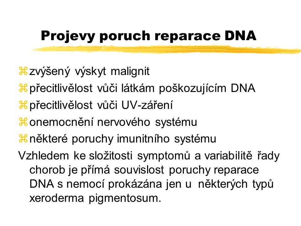 Fenotypové defekty u XP: zzvýšená citlivost vůči UV a UV-mimetikům, zdefektní excize thymidinových dimerů, zdefektní reparační syntézu DNA zzvýšenou frekvenci výměny sesters.