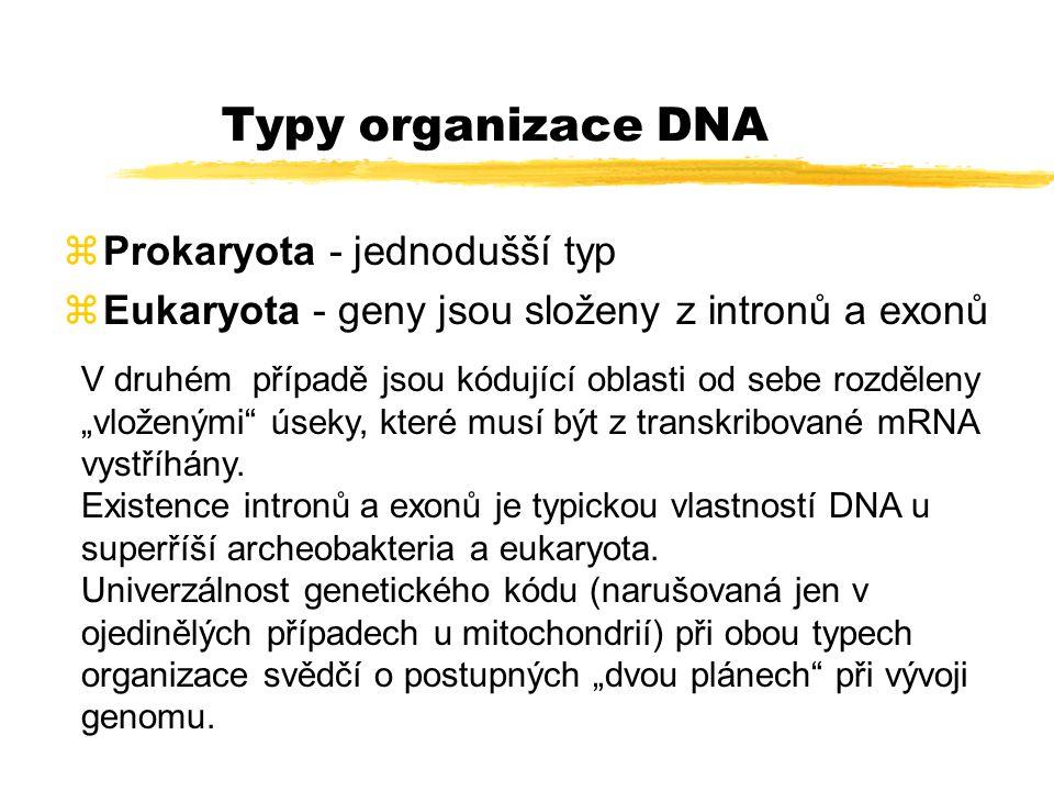 Struktura DNA u prokaryot (dole) a eukaryot