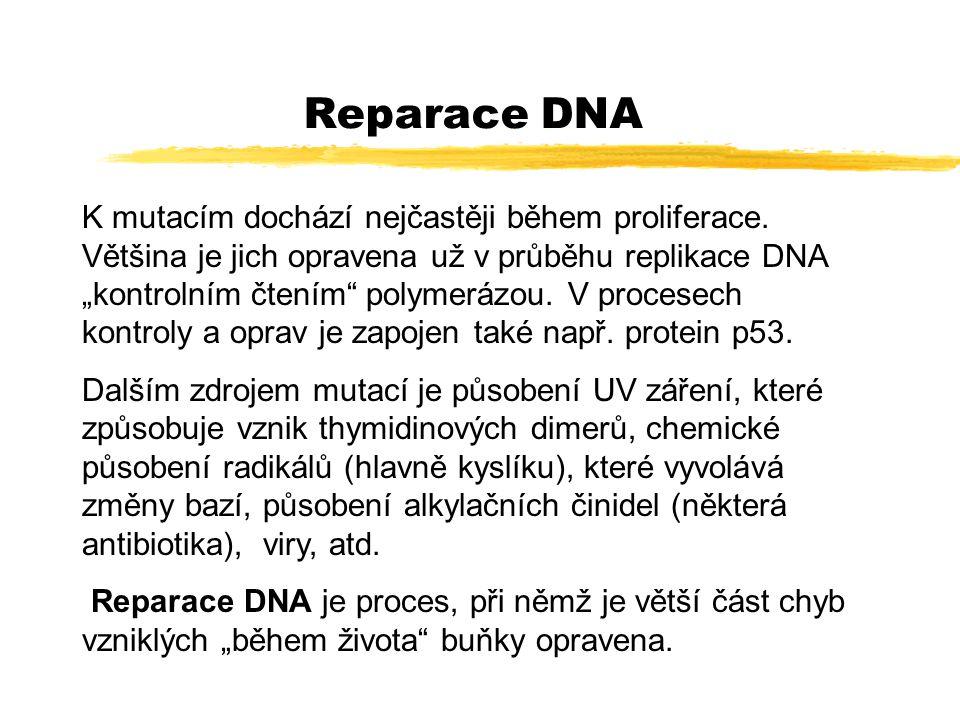 Enzymy účastnící se reparace DNA Procesů reparace DNA je několik, jejich funkce se do značné míry mohou překrývat.