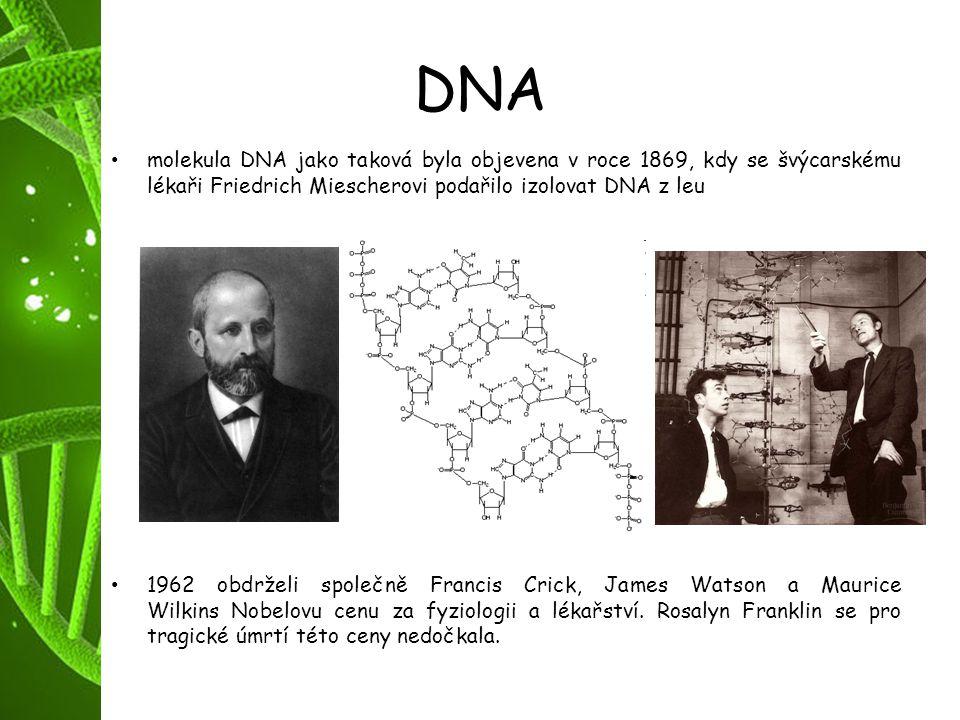 DNA molekula DNA jako taková byla objevena v roce 1869, kdy se švýcarskému lékaři Friedrich Miescherovi podařilo izolovat DNA z leu 1962 obdrželi spol
