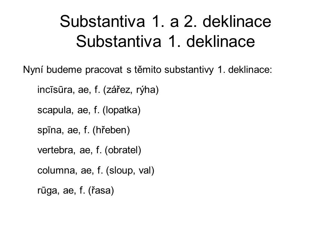 Substantiva 1.a 2. deklinace Substantiva 1. deklinace Nyní budeme pracovat s těmito substantivy 1.