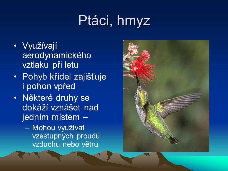 Ptáci, hmyz Využívají aerodynamického vztlaku při letu Pohyb křídel zajišťuje i pohon vpřed Některé druhy se dokáží vznášet nad jedním místem – –Mohou