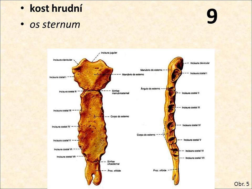 9 kost hrudní os sternum Obr. 5