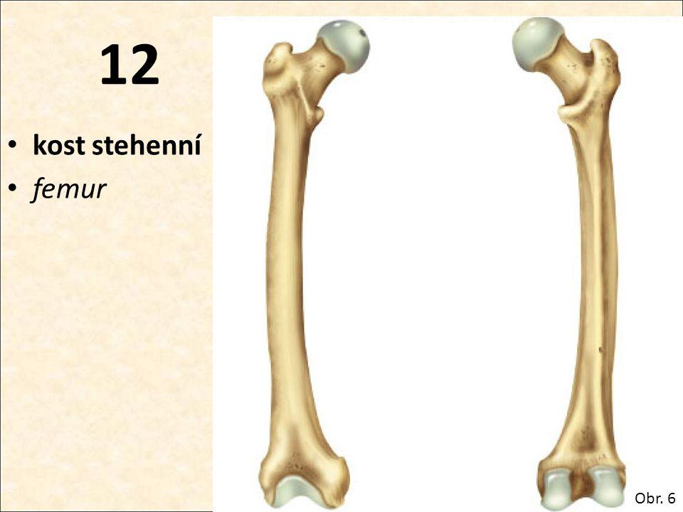 12 kost stehenní femur Obr. 6