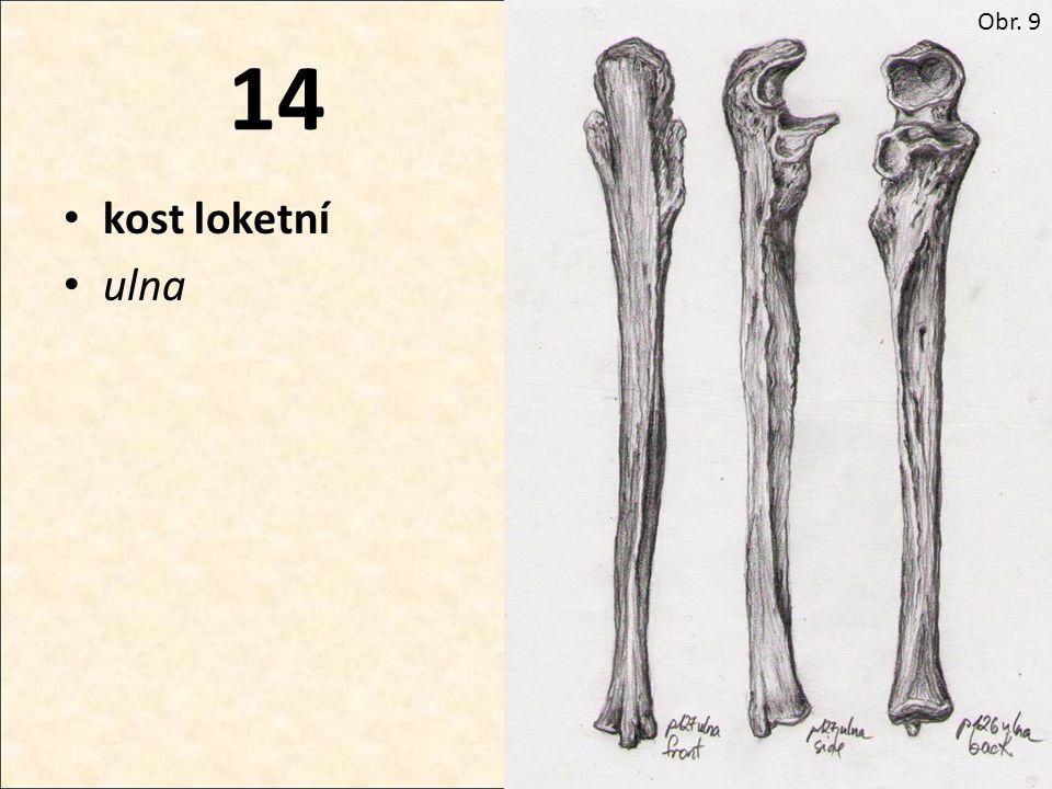 14 kost loketní ulna Obr. 9