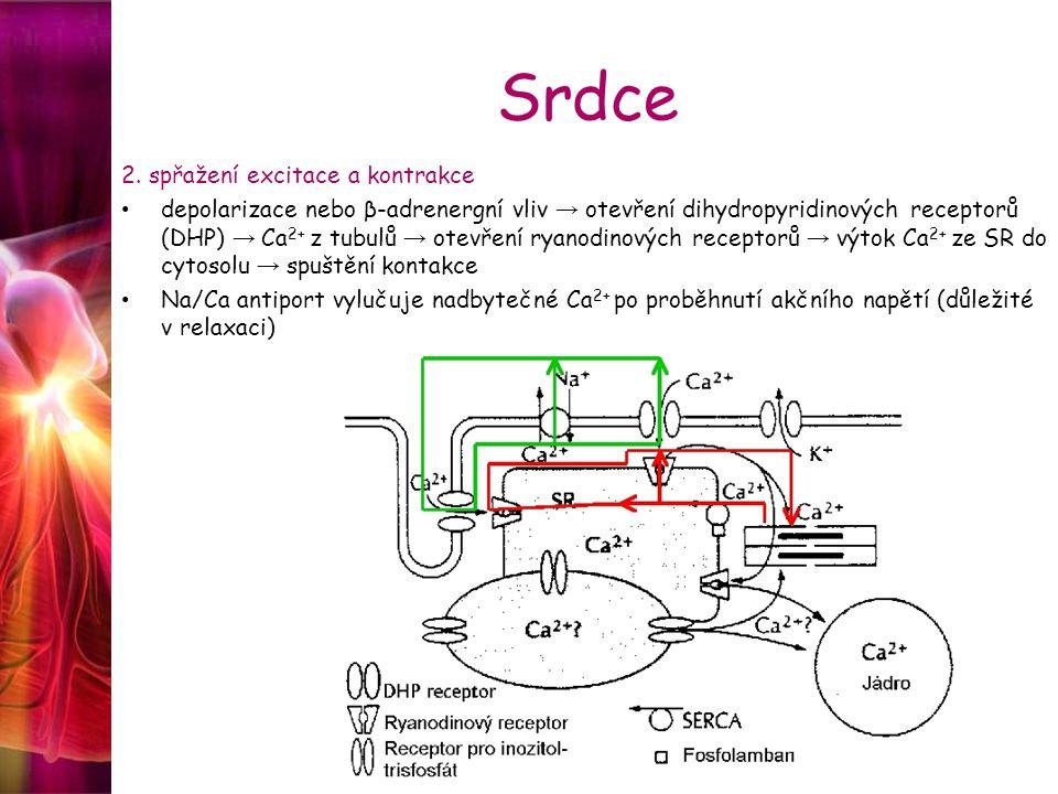 Srdce 2. spřažení excitace a kontrakce depolarizace nebo β-adrenergní vliv → otevření dihydropyridinových receptorů (DHP) → Ca 2+ z tubulů → otevření