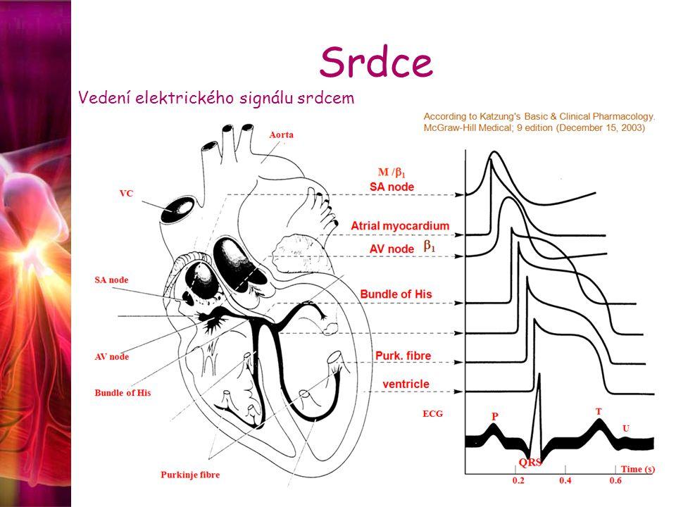 Srdce Vedení elektrického signálu srdcem