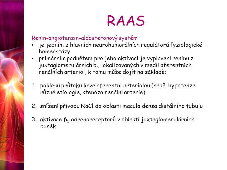 RAAS Renin-angiotenzin-aldosteronový systém je jedním z hlavních neurohumorálních regulátorů fyziologické homeostázy primárním podnětem pro jeho aktivaci je vyplavení reninu z juxtaglomerulárních b., lokalizovaných v medii aferentních renálních arteriol, k tomu může dojít na základě: 1.poklesu průtoku krve aferentní arteriolou (např.