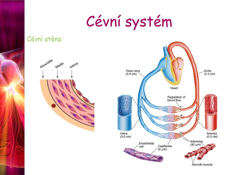 Cévní systém Chlopně v srdci – cípaté a poloměsíčité v žílách (varixy, tromby, embolie) v lymfatických cévách