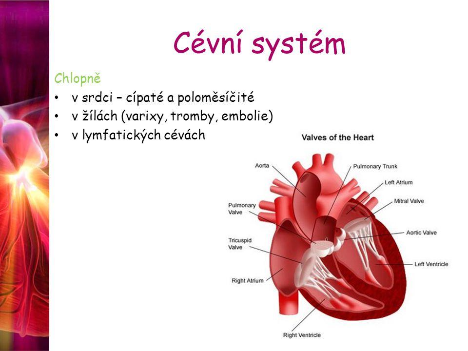 Srdce dutý orgán, jehož stěny tvoří srdeční svalovina = speciální forma příčně pruhovaného svalstva, které je v trvalé aktivitě pravidelnými kontrakcemi zajišťuje neustálý oběh krve a mízy v organismu metabolizmus srdeční svalové buňky je převážně vázán na oxidační pochody zdrojem energie pro srdeční činnost jsou mastné kyseliny, laktát, glukóza a v menší míře i aminokyseliny