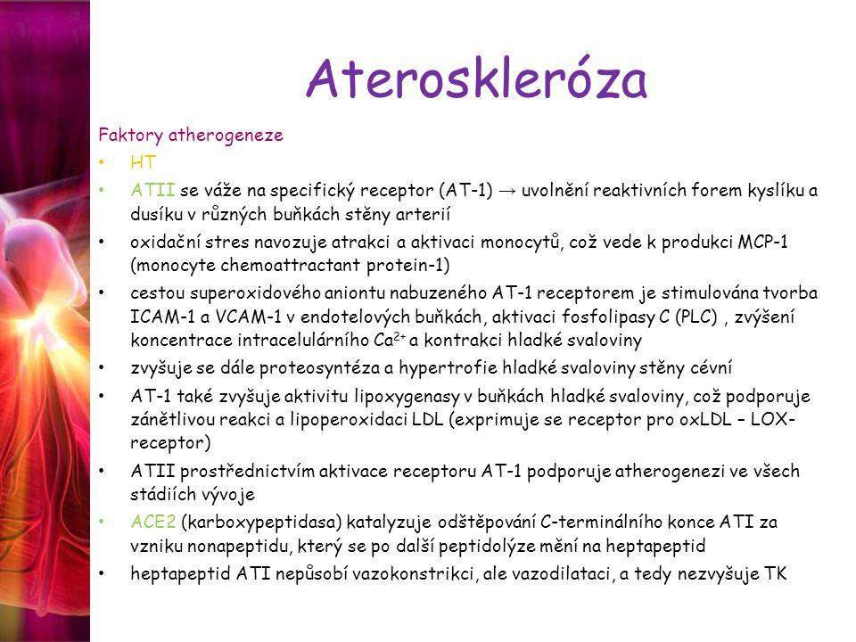 Ateroskleróza Faktory atherogeneze HT ATII se váže na specifický receptor (AT-1) → uvolnění reaktivních forem kyslíku a dusíku v různých buňkách stěny arterií oxidační stres navozuje atrakci a aktivaci monocytů, což vede k produkci MCP-1 (monocyte chemoattractant protein-1) cestou superoxidového aniontu nabuzeného AT-1 receptorem je stimulována tvorba ICAM-1 a VCAM-1 v endotelových buňkách, aktivaci fosfolipasy C (PLC), zvýšení koncentrace intracelulárního Ca 2+ a kontrakci hladké svaloviny zvyšuje se dále proteosyntéza a hypertrofie hladké svaloviny stěny cévní AT-1 také zvyšuje aktivitu lipoxygenasy v buňkách hladké svaloviny, což podporuje zánětlivou reakci a lipoperoxidaci LDL (exprimuje se receptor pro oxLDL – LOX- receptor) ATII prostřednictvím aktivace receptoru AT-1 podporuje atherogenezi ve všech stádiích vývoje ACE2 (karboxypeptidasa) katalyzuje odštěpování C-terminálního konce ATI za vzniku nonapeptidu, který se po další peptidolýze mění na heptapeptid heptapeptid ATI nepůsobí vazokonstrikci, ale vazodilataci, a tedy nezvyšuje TK