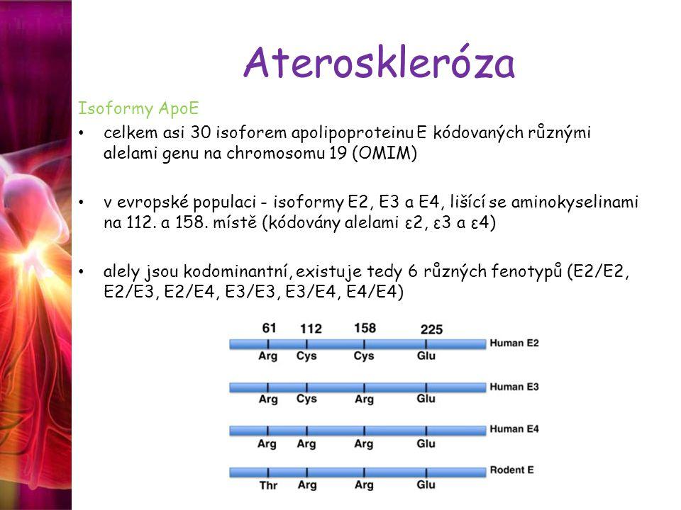 Ateroskleróza Isoformy ApoE celkem asi 30 isoforem apolipoproteinu E kódovaných různými alelami genu na chromosomu 19 (OMIM) v evropské populaci - isoformy E2, E3 a E4, lišící se aminokyselinami na 112.