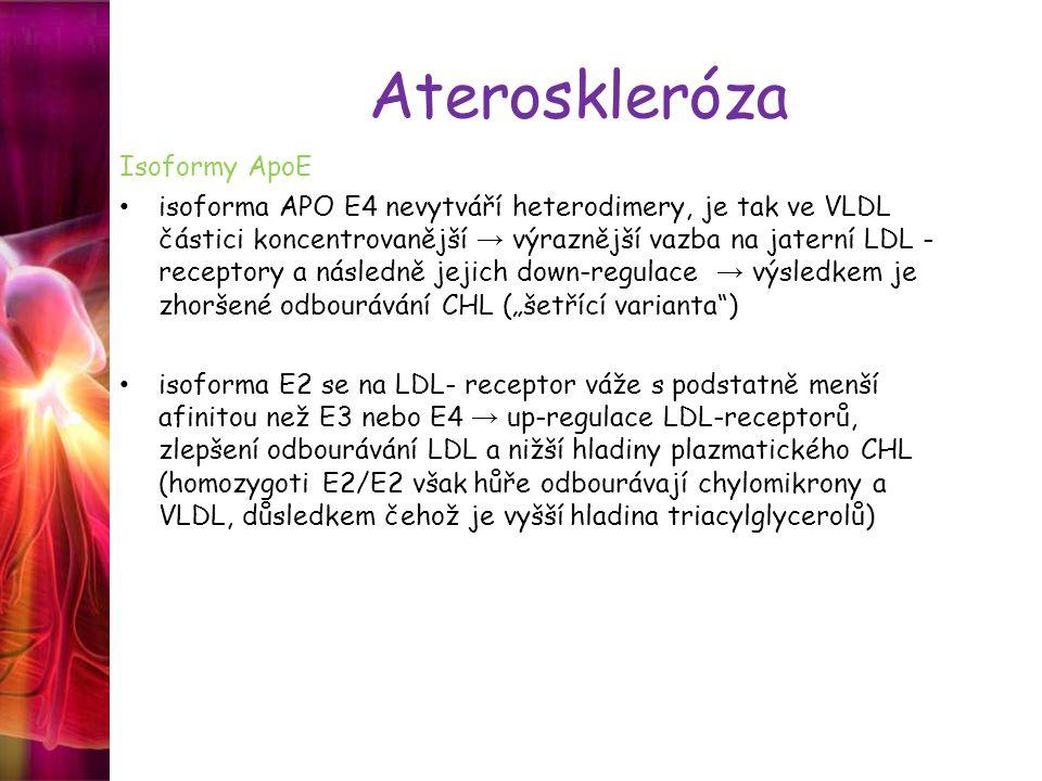 """Ateroskleróza Isoformy ApoE isoforma APO E4 nevytváří heterodimery, je tak ve VLDL částici koncentrovanější → výraznější vazba na jaterní LDL - receptory a následně jejich down-regulace → výsledkem je zhoršené odbourávání CHL (""""šetřící varianta ) isoforma E2 se na LDL- receptor váže s podstatně menší afinitou než E3 nebo E4 → up-regulace LDL-receptorů, zlepšení odbourávání LDL a nižší hladiny plazmatického CHL (homozygoti E2/E2 však hůře odbourávají chylomikrony a VLDL, důsledkem čehož je vyšší hladina triacylglycerolů)"""