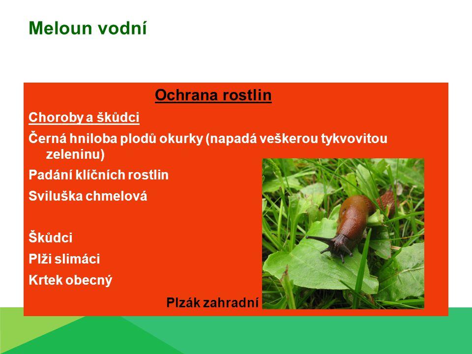 Meloun vodní Ochrana rostlin Choroby a škůdci Černá hniloba plodů okurky (napadá veškerou tykvovitou zeleninu) Padání klíčních rostlin Sviluška chmelo