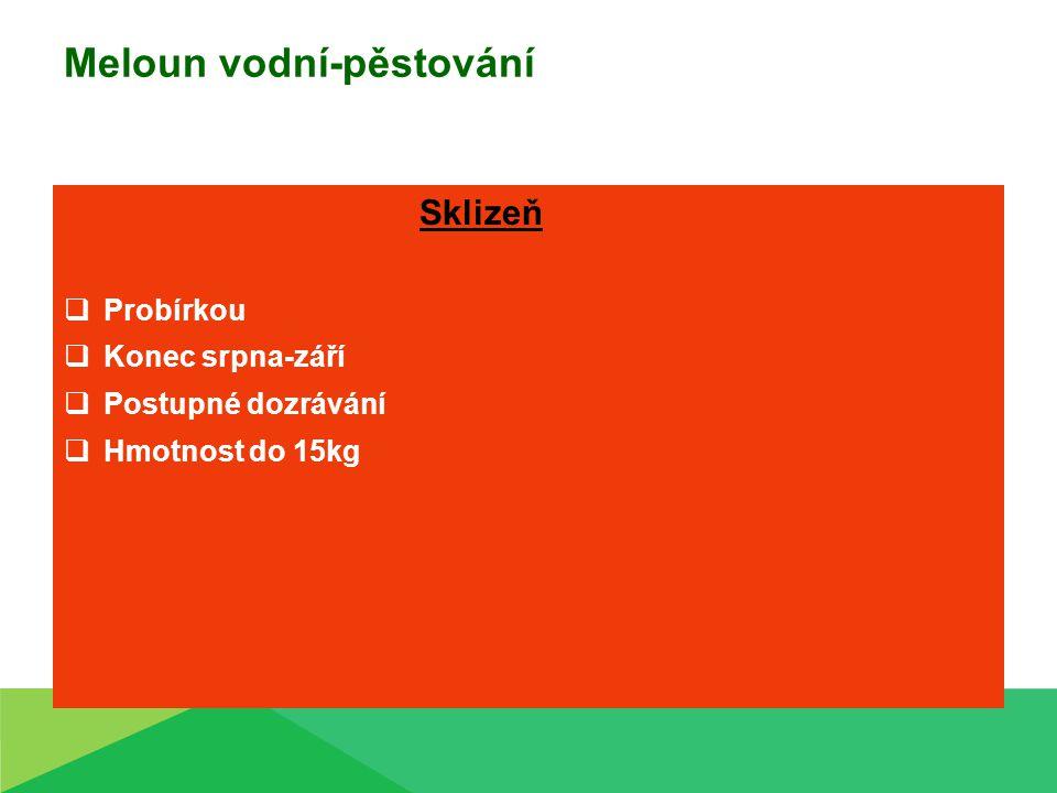 Meloun vodní-pěstování Sklizeň  Probírkou  Konec srpna-září  Postupné dozrávání  Hmotnost do 15kg