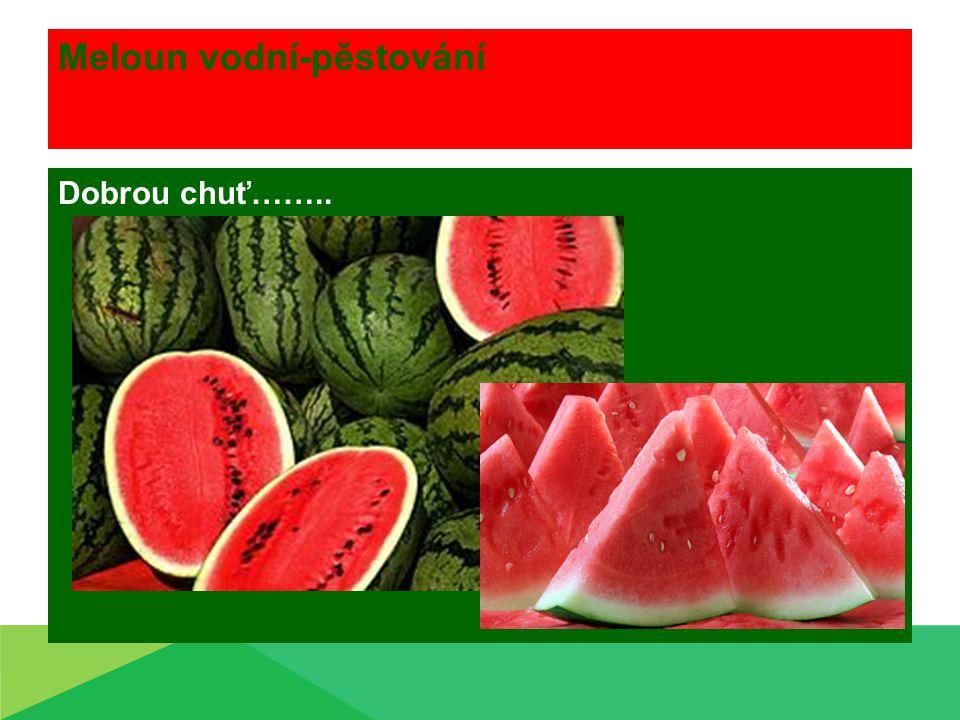 Meloun vodní-pěstování Dobrou chuť……..
