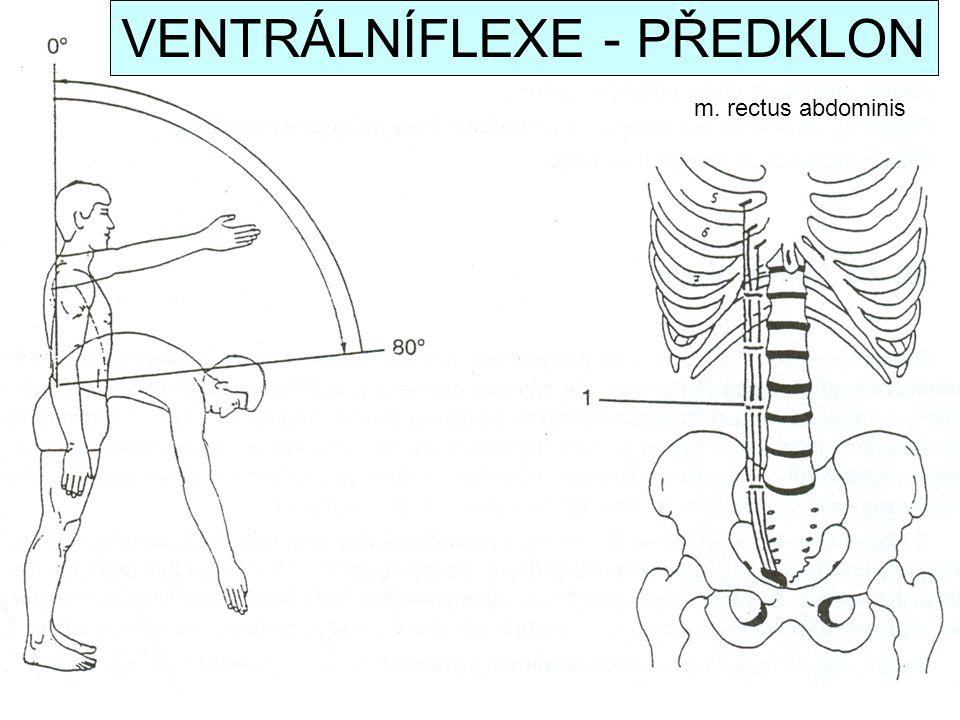 m. rectus abdominis VENTRÁLNÍFLEXE - PŘEDKLON