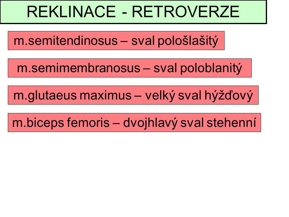 REKLINACE - RETROVERZE m.semitendinosus – sval pološlašitý m.glutaeus maximus – velký sval hýžďový m.semimembranosus – sval poloblanitý m.biceps femoris – dvojhlavý sval stehenní