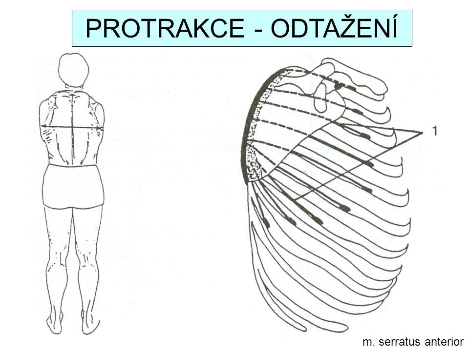m. serratus anterior PROTRAKCE - ODTAŽENÍ