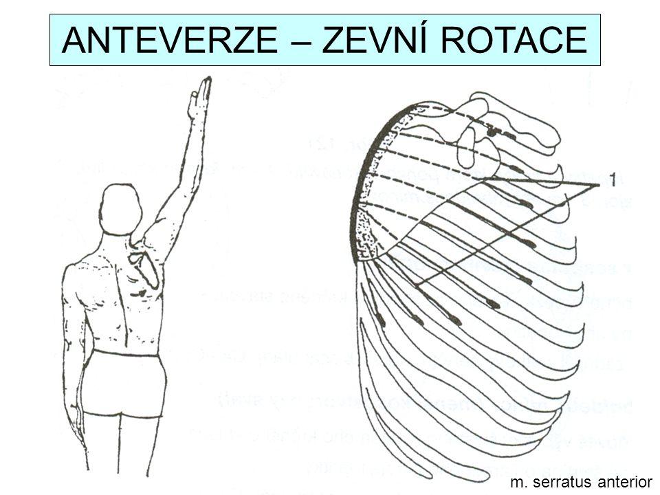 m. serratus anterior ANTEVERZE – ZEVNÍ ROTACE