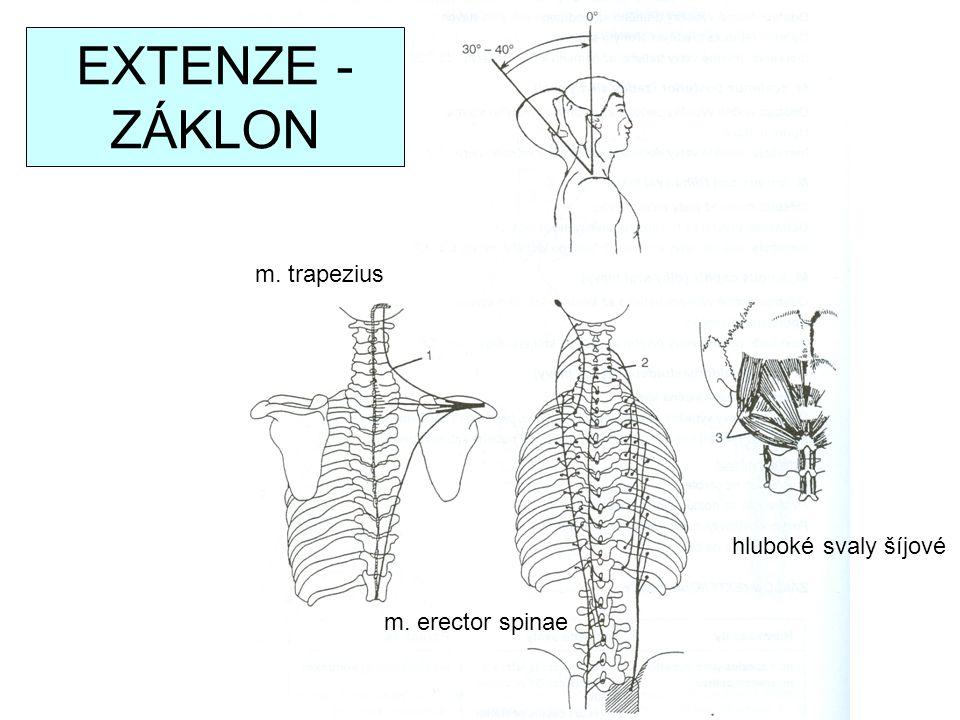EXTENZE - ZÁKLON m. trapezius m. erector spinae hluboké svaly šíjové