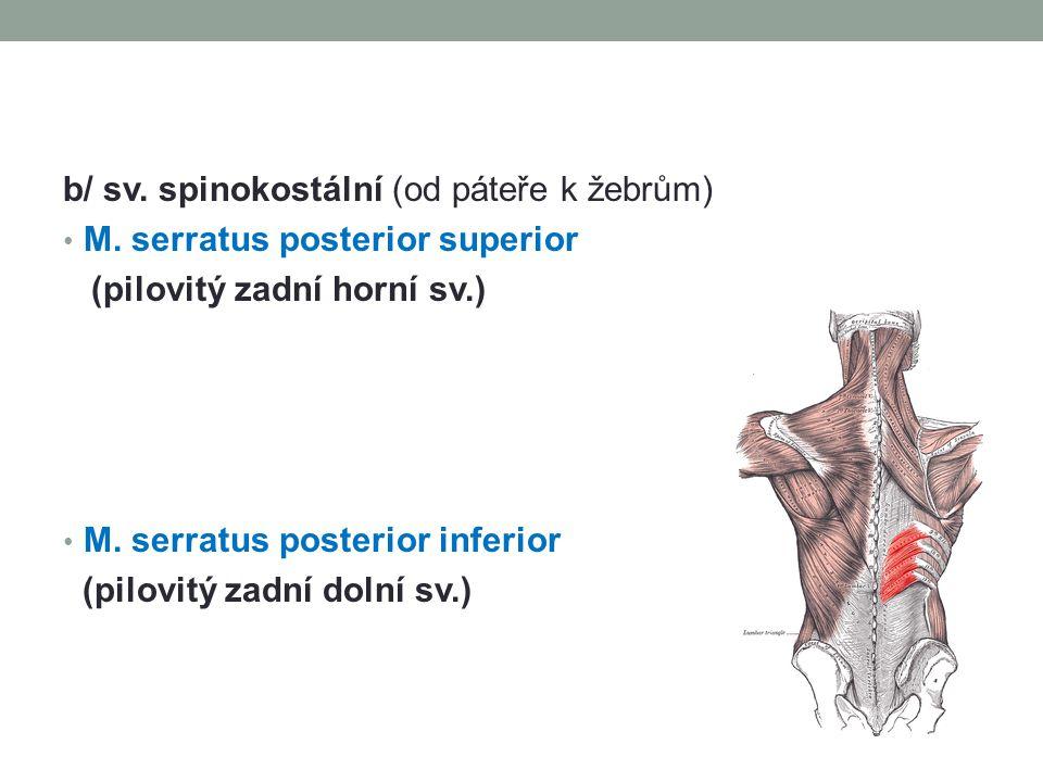 b/ sv. spinokostální (od páteře k žebrům) M. serratus posterior superior (pilovitý zadní horní sv.) M. serratus posterior inferior (pilovitý zadní dol