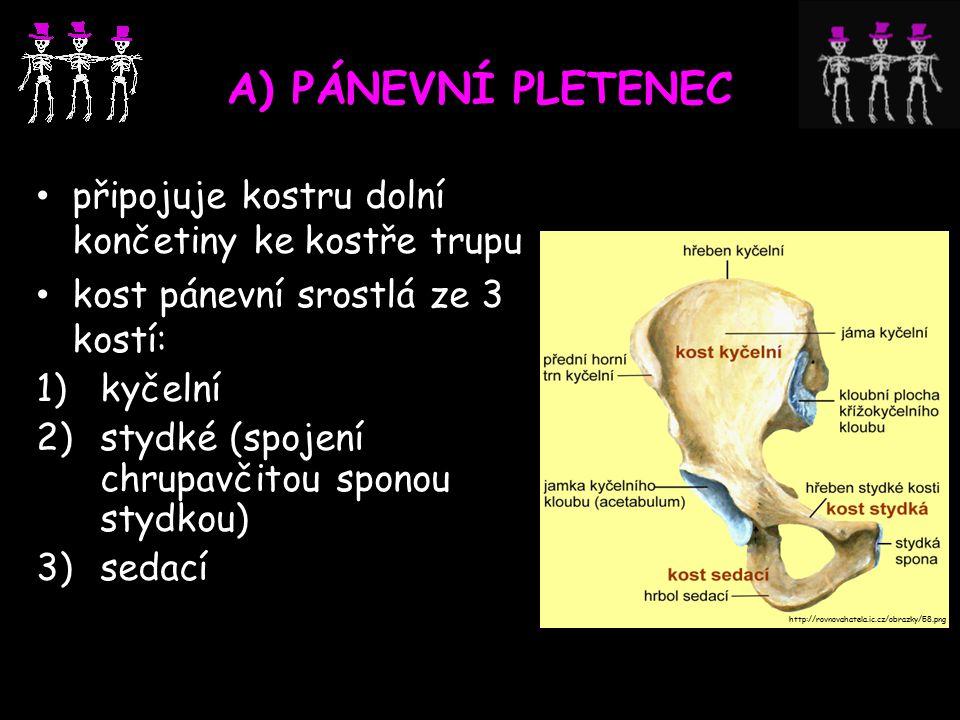 A) PÁNEVNÍ PLETENEC připojuje kostru dolní končetiny ke kostře trupu kost pánevní srostlá ze 3 kostí: 1)kyčelní 2)stydké (spojení chrupavčitou sponou stydkou) 3)sedací http://rovnovahatela.ic.cz/obrazky/58.png