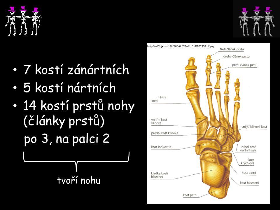 7 kostí zánártních 5 kostí nártních 14 kostí prstů nohy (články prstů) po 3, na palci 2 tvoří nohu http://nd01.jxs.cz/173/708/0b71261412_37589998_o2.png