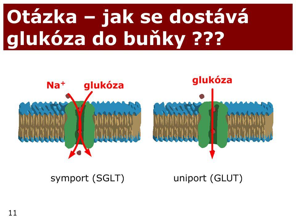 11 Otázka – jak se dostává glukóza do buňky ???