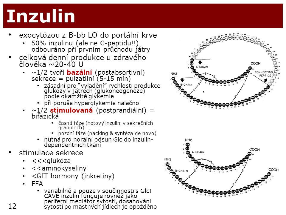 12 Inzulin exocytózou z B-bb LO do portální krve 50% inzulinu (ale ne C-peptidu!!) odbouráno při prvním průchodu játry celková denní produkce u zdravé