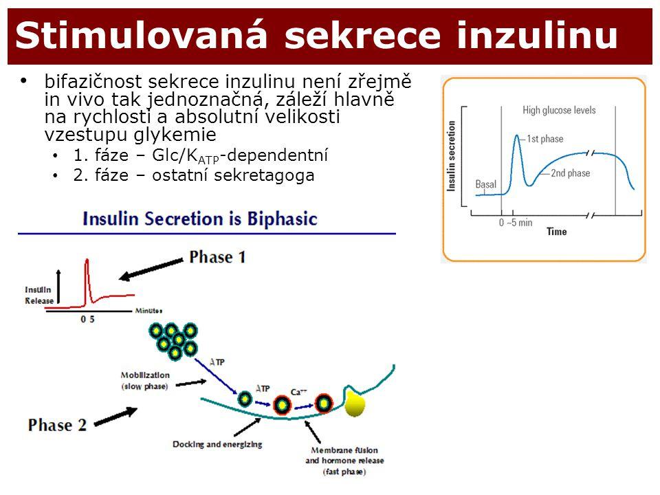 16 Stimulovaná sekrece inzulinu bifazičnost sekrece inzulinu není zřejmě in vivo tak jednoznačná, záleží hlavně na rychlosti a absolutní velikosti vze