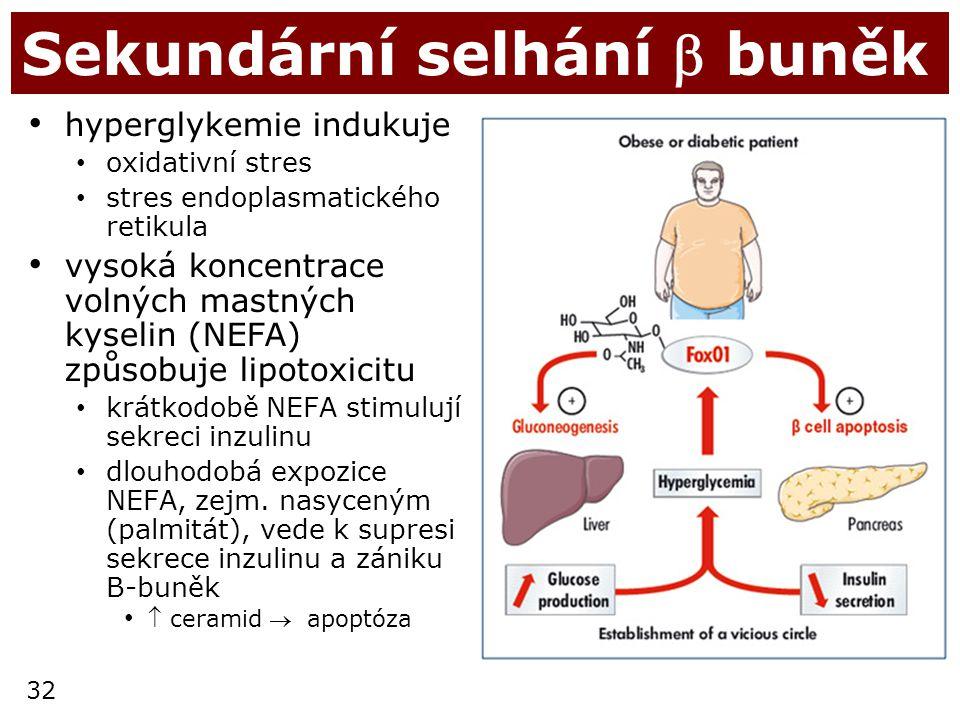 32 Sekundární selhání  buněk hyperglykemie indukuje oxidativní stres stres endoplasmatického retikula vysoká koncentrace volných mastných kyselin (NE