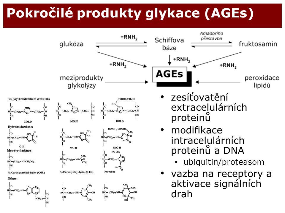 46 Pokročilé produkty glykace (AGEs) zesíťovatění extracelulárních proteinů modifikace intracelulárních proteinů a DNA ubiquitin/proteasom vazba na re