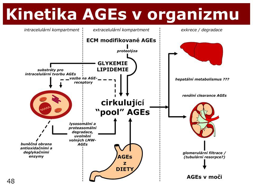 48 Kinetika AGEs v organizmu