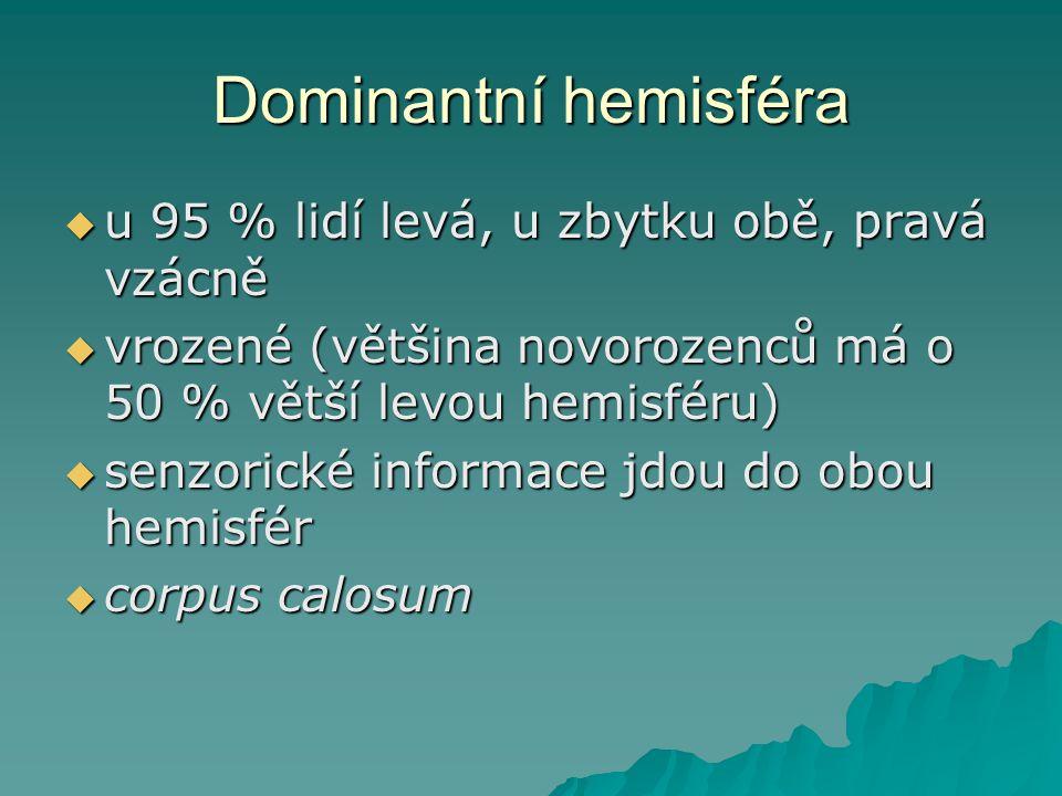 Dominantní hemisféra  u 95 % lidí levá, u zbytku obě, pravá vzácně  vrozené (většina novorozenců má o 50 % větší levou hemisféru)  senzorické infor