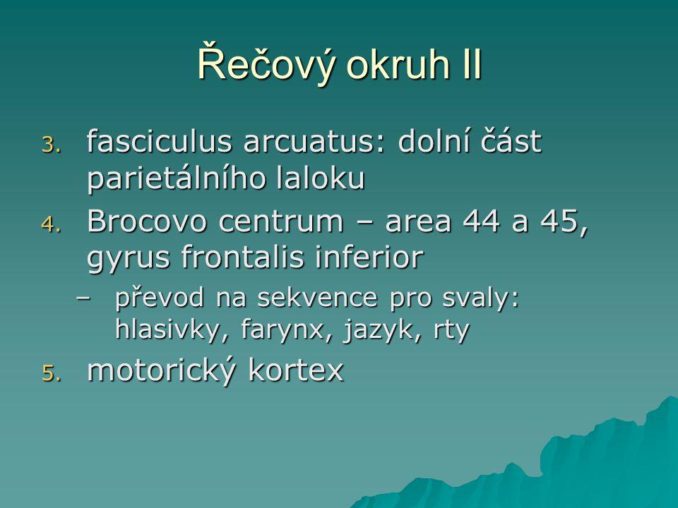 Řečový okruh II 3. fasciculus arcuatus: dolní část parietálního laloku 4. Brocovo centrum – area 44 a 45, gyrus frontalis inferior –převod na sekvence